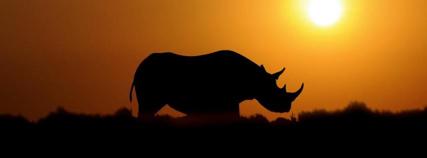 RhinoSun
