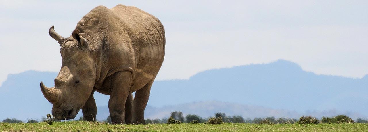 white-rhino_banner